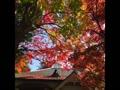 秋色さがして