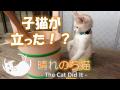 2本足で立つ子猫の可愛いこと 22 - Kitten standing with two legs -